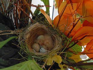 Birdies 1